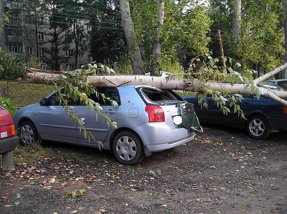Упало дерево на автомобиль – судебная практика